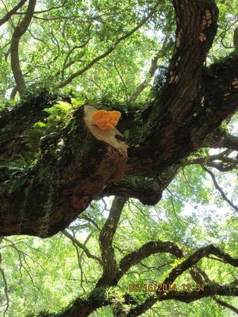 Angel Oak Tree : Beautiful Nature