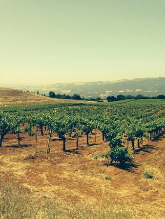 Valet of the Moon Wine Tours: Beautiful vines