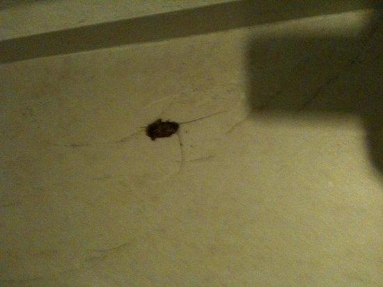 El Dorado Royale, by Karisma: cockroache in the shower