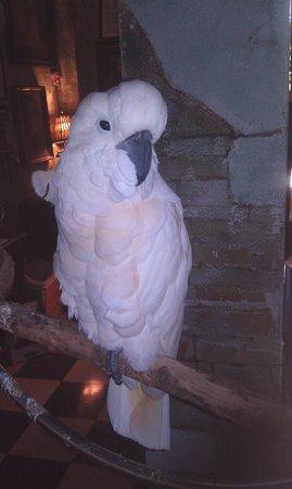 The Gallery Inn : Hay varias aves por varias areas
