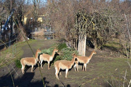Tiergarten Schönbrunn - Zoo Vienna: )