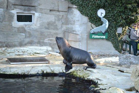 Tiergarten Schönbrunn - Zoo Vienna: актер