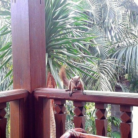 Padma Resort Legian: chipmunk.... :D
