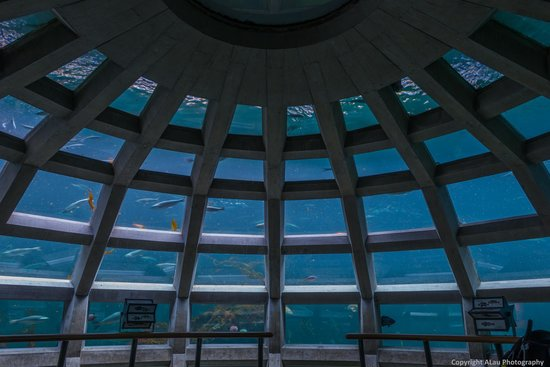 Seattle Aquarium : 360 degree underwater viewing dome