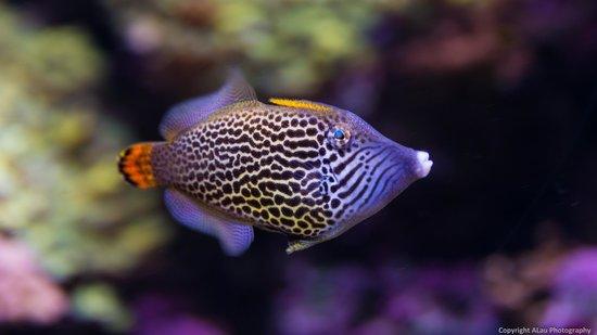 Seattle Aquarium : Cool looking fish