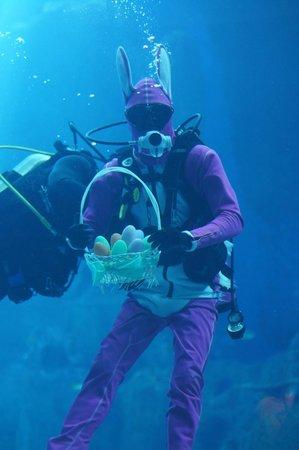 Underwater World and Dolphin Lagoon: какой-то пасхальный кролик