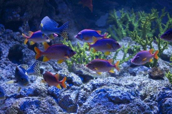Underwater World and Dolphin Lagoon: рыбы