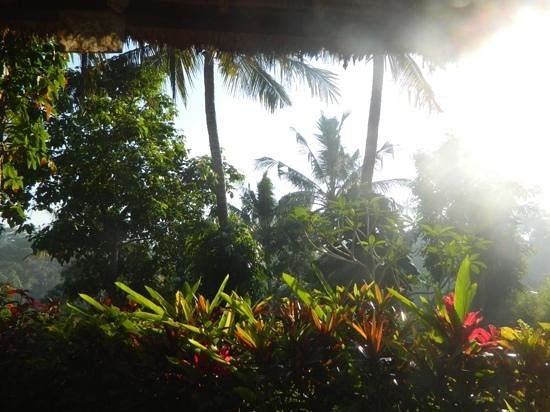 Maya Ubud Resort & Spa: view from our garden villa!