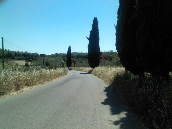 Parco Sculture Del Chianti: sulla strada per Pievasciata