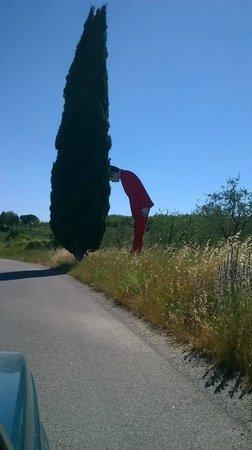 Parco Sculture Del Chianti : sulla strada per Pievasciata