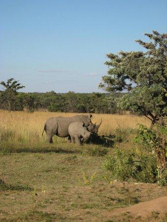Mabula Game Lodge: rhinos