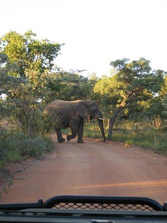 Mabula Game Lodge: elephants
