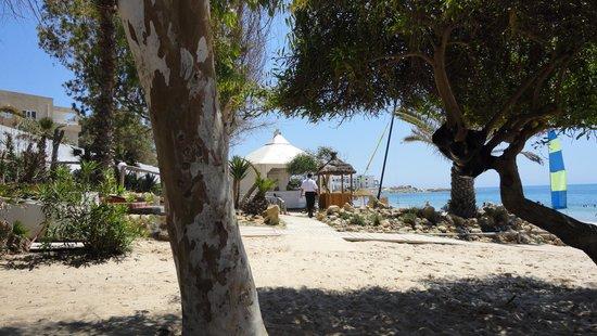 Mediterranee Thalasso Golf : ook aan het strand mooie bomen