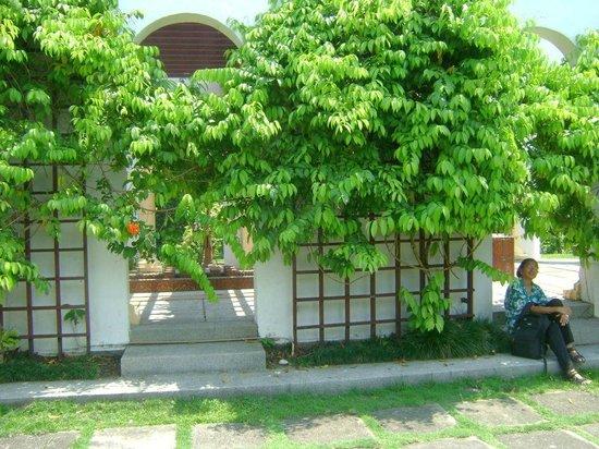 The Hibiscus Park: Arbour at Taman Bunga Raya