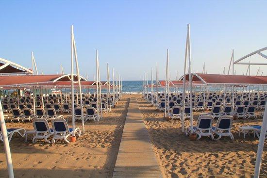 Alba Queen Hotel: beach