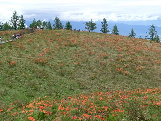 Mt. Amari: 満開のつつじ2