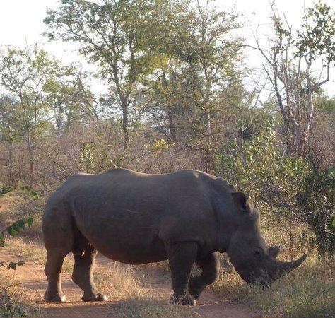 Kuname Lodge: The Rhino