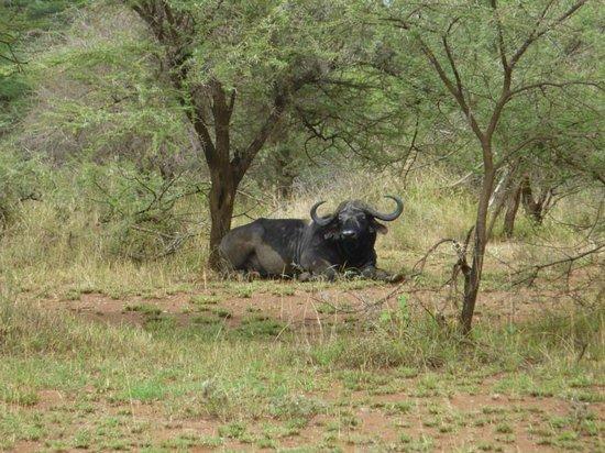 Asanja Africa: Game Drive