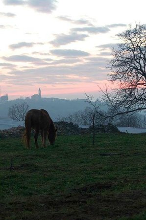 Krnica, Kroatia: The stunning view from our farm