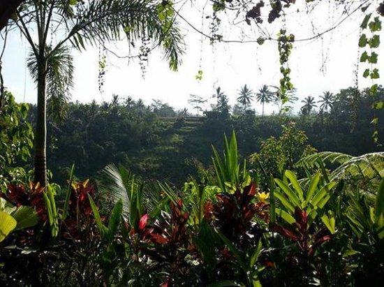 Bidadari Private Villas & Retreat : Scenery from the common living area