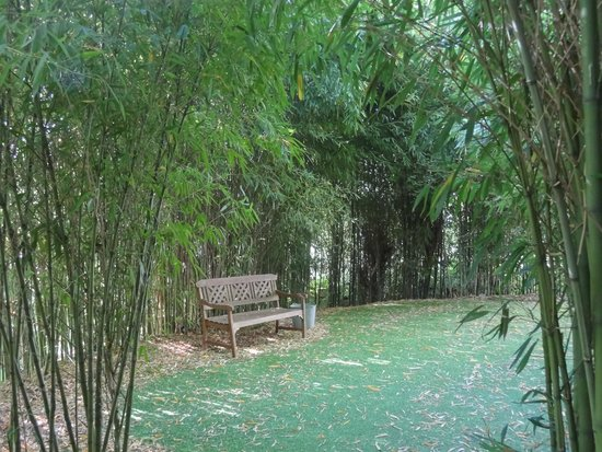 Hotel Spa Relais & Chateaux A Quinta da Auga: Romántico y largo paseo por el bosque-jardin salvaje que rodea este espectacular hotel.