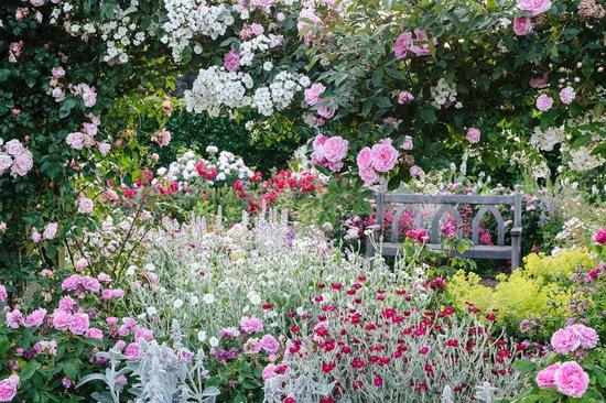 Грейт-Торрингтон, UK: Shrub Rose garden
