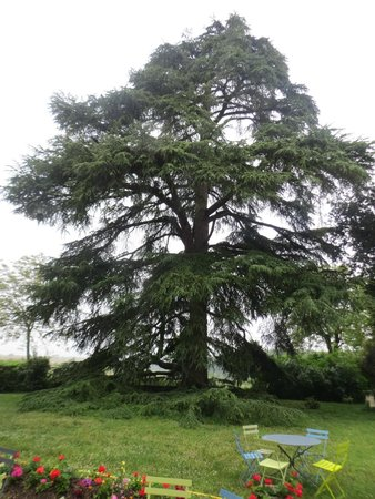 Le Domaine de Mestre: Um cedro nos jardins