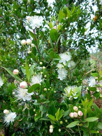 June 2014, Flowers of Crete excursion