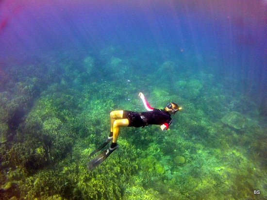 Blue Immersion Freediving: snorkeling after freediving session