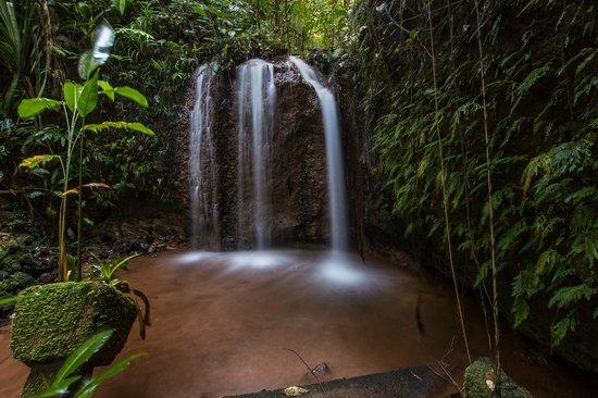Paronella Park: Teresa's Falls