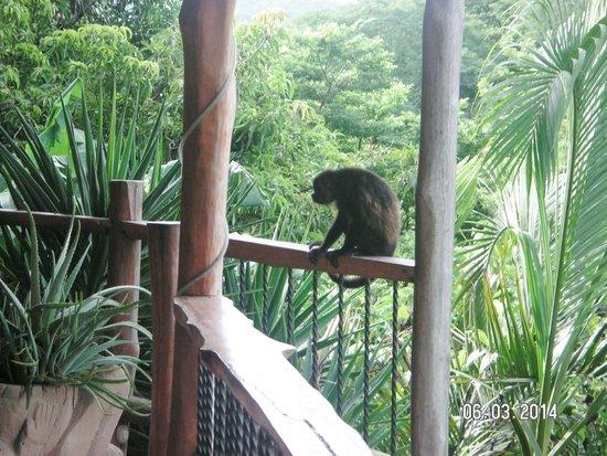 Villa Mango: Howler monkey