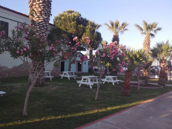 Club Tarhan Beach Hotel : Garden view