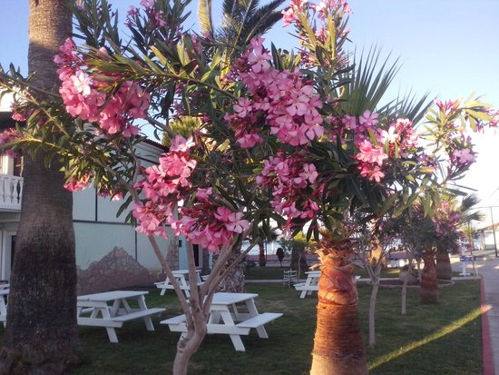 Club Tarhan Beach Hotel : The garden