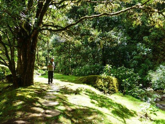 Trogon Lodge San Gerardo de Dota : rainforest