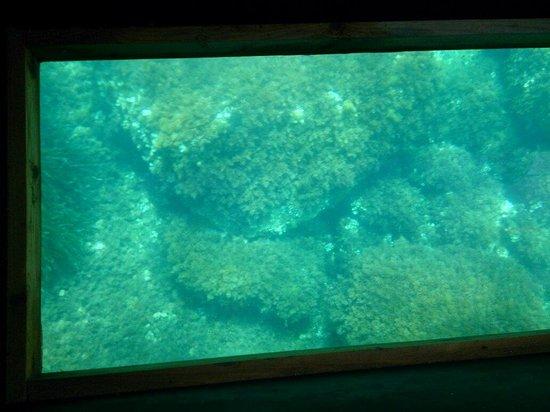 Playa Puerto de San Miguel: Glass bottomed boat San Miguel...