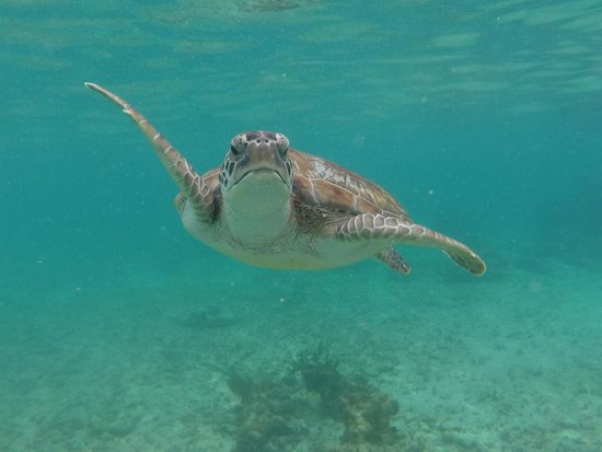 Catamaya Sailing Cruises : The sea turtle that came around
