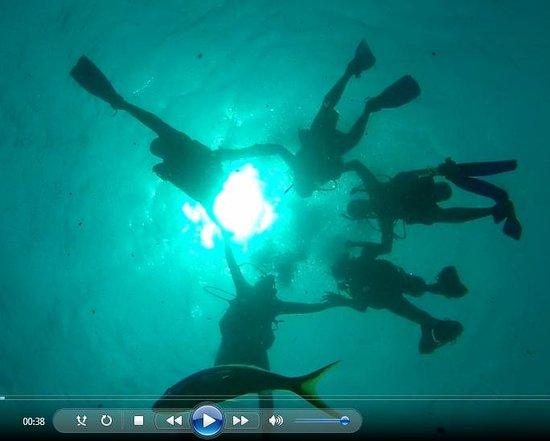 Silent World Dive Center: team dive