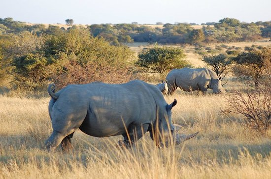 Monate Game Lodge: On a game drive