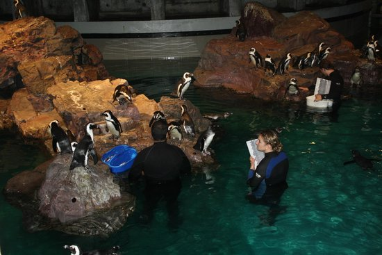 Small Penguin Like Creatures Picture Of New England Aquarium Boston Tripadvisor