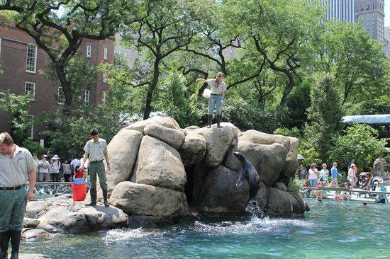 Central Park Zoo: sea lions