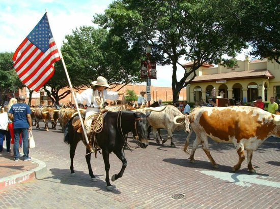 Stockyards Rodeo : The cattle drive which happens twice a day