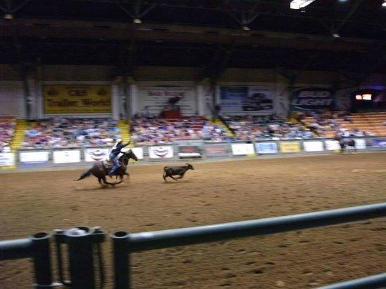 Stockyards Rodeo : Calf roping