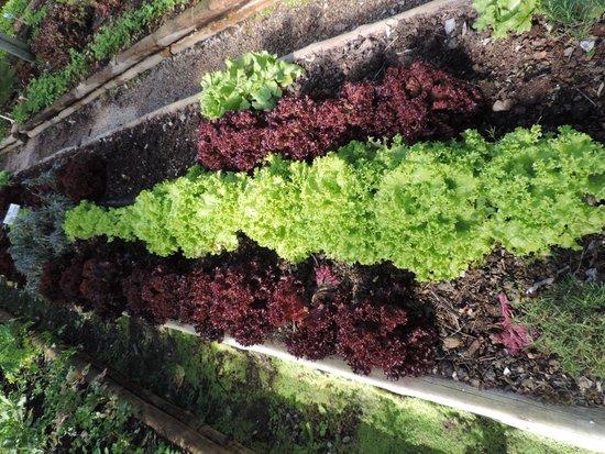 Ponta dos Ganchos Exclusive Resort: Horta orgânica