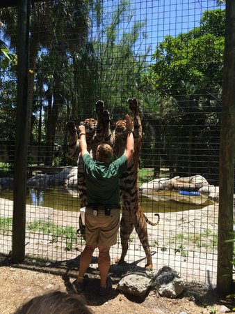 Naples Zoo at Caribbean Gardens: Zoo Keeper with Tigers