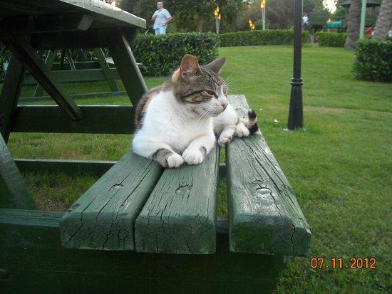 Limak Arcadia Golf & Sport Resort: Hotel Cat