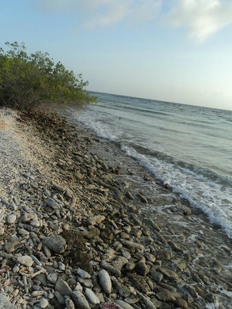 Santa Barbara Beach & Golf Resort, Curacao: Rocky shore