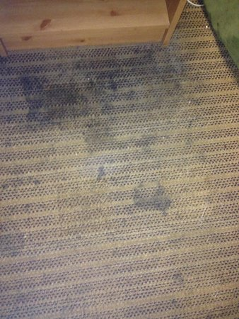 Extended Stay America - Chicago - Naperville - East: This is the carpet in front of the nightstand by the bed.