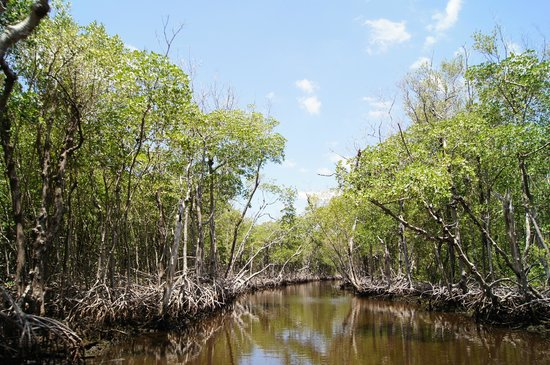 Everglades City Airboat Tours : Everglades City