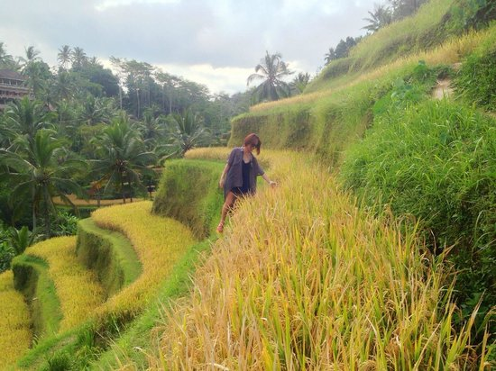 Bali Island Adventure Tours : Take a stroll in lovely Rice Farm