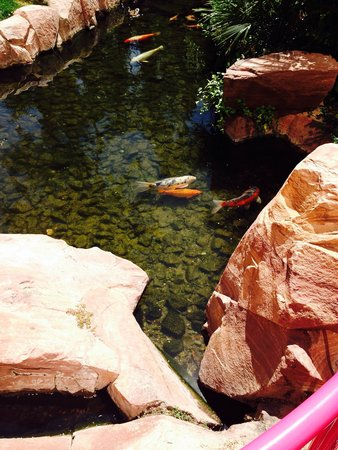 Flamingo Las Vegas Hotel & Casino: Love the pound outside with the live fish swimming around.